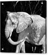 Elephant Acrylic Print by Camille Lopez