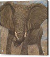 Elephant Charging Acrylic Print