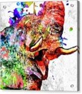 Elephant Colored Grunge Acrylic Print