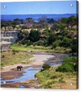 Elephant Crossing In Tarangire Acrylic Print