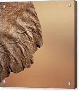 Elephant Ear Close-up Acrylic Print