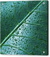 Elephant Ear Leaf Acrylic Print