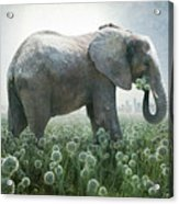 Elephant Eating Onions Acrylic Print