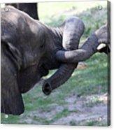 Elephant Greeting IIi Acrylic Print