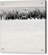 Elephant Herd East Africa Acrylic Print