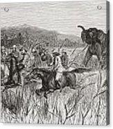 Elephant Hunters In The 19th Century Acrylic Print