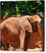 Elephant In Red Clay Acrylic Print