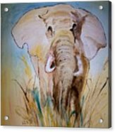 Elephant In The Field Acrylic Print