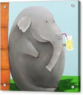 Elephant In The Shade Acrylic Print
