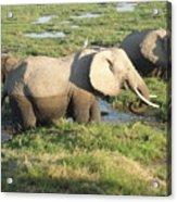 Elephant Mother And Calves Acrylic Print