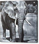 Elephant Night Walker Acrylic Print
