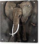 Elephant No 04 Acrylic Print