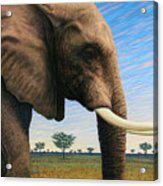 Elephant On Safari Acrylic Print