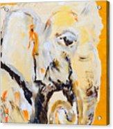Elephant Orange Acrylic Print