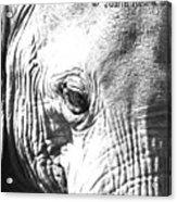 Elephant Portret Acrylic Print