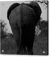 Elephant Tail Gate Acrylic Print