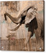 Elephant Visions Wall Art Acrylic Print