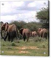 Elephant Walk Tsavo National Park Kenya Acrylic Print