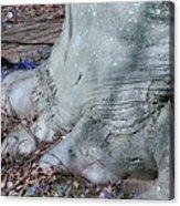 Elephant's Foot Acrylic Print