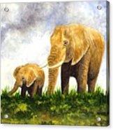 Elephants - Mother And Baby Acrylic Print