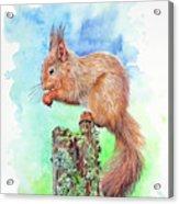 Elevenses - Red Squirrel Acrylic Print