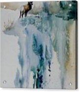 Elk On Top Acrylic Print