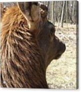 Elk Profile Acrylic Print