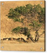 Elk Under Tree Acrylic Print