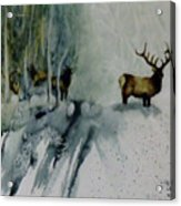 Elk With In Acrylic Print