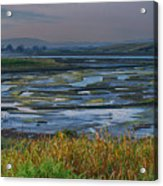 Elkhorn Slough Acrylic Print