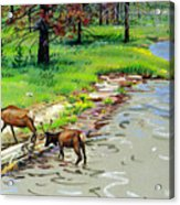 Elks Crossing Acrylic Print