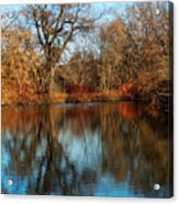 Elm By The Connecticut River In Autumn Acrylic Print