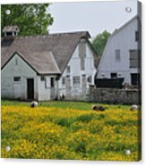 Elm Grove Farm Acrylic Print