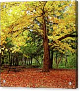 Elora Gorge Campsite In Fall Acrylic Print