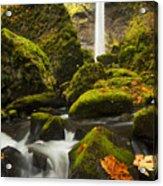 Elowah Autumn Acrylic Print