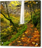 Elowah Autumn Trail Acrylic Print