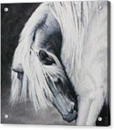 Elsa's Itch Acrylic Print