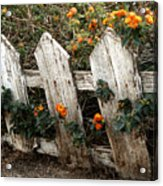 Elsinore Fence Acrylic Print