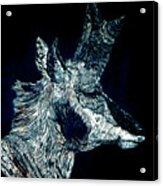 Elusive Visions Antelope Buck Acrylic Print
