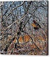 Elusive Woodcock's Woody Environment Acrylic Print