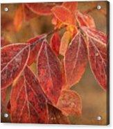 Embers Of Autumn Acrylic Print
