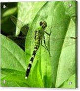Emerald Dragonfly Acrylic Print