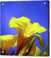 Emerging Into The Light II Acrylic Print