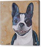 Emma The Boston Terrier Acrylic Print