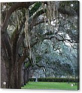 Emmet Park In Savannah Acrylic Print