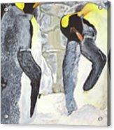 Emperors Of The Antarctic Acrylic Print