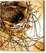 Empty Nest Acrylic Print