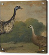 Emu, Cape Barren Goose And Magpie Goose Acrylic Print