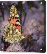En Garde - Painted Lady - Butterfly Acrylic Print