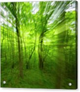 Enchanted Forest 1 Acrylic Print